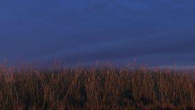 Grasrijke Heuvel bij Zonsondergang, Hemelachtergrond, Royalty-vrije Stock Foto's