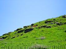Grasrijke Heuvel met rustieke houten fenceline Royalty-vrije Stock Foto's