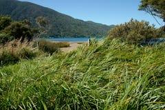 Grasrijke rand aan strand. Royalty-vrije Stock Foto's