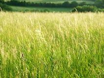 Grasrijke Weide Stock Foto