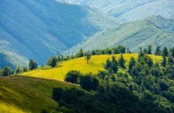 Grasrijke weide op berg in de zomer Royalty-vrije Stock Fotografie