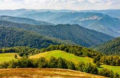 Grasrijke weide op berg in de zomer Stock Foto's