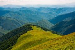 Grasrijke weide op berg in de zomer Stock Afbeeldingen