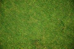 Grass-001 Fotografía de archivo libre de regalías