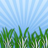 Grass [02] Royalty Free Stock Photos