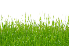 Grass 03 stock photography