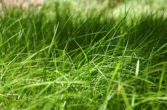 Grass. A close up of grass royalty free stock photos