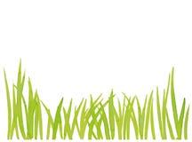Grass Royalty Free Stock Photos