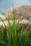 Grass. Green and tender spring grass royalty free stock photos