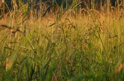 Grass. Russian country grass in August royalty free stock photos