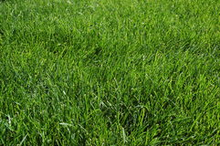Grass. Picture of grass Stock Photos