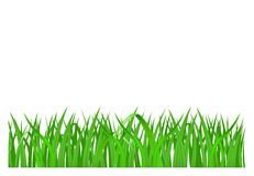 Grass. Green grass isolated on white background, vector illustration Stock Photography