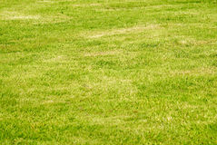 Grass. Green grass texture from a golf-field Royalty Free Stock Photo