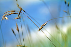 Grass. Very cool and colorful nature background Stock Photos
