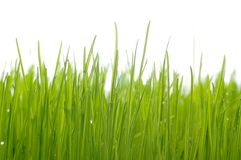 Grass. Field isolated on white background stock image