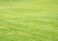 Grass. Grren grass on sloping hill stock image