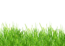 Grass. Isolated green grass on a white background Stock Images