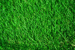 Grass. Beautiful Fresh Green Grass Background royalty free stock images
