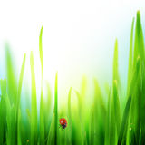 Grass. Beautiful Fresh Green Grass Border stock image