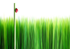 Free Grass Royalty Free Stock Photography - 11864197