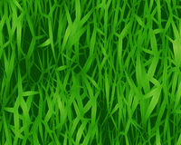 Grass. Close-up Realistic Illustration of Grass - Background Royalty Free Stock Photography