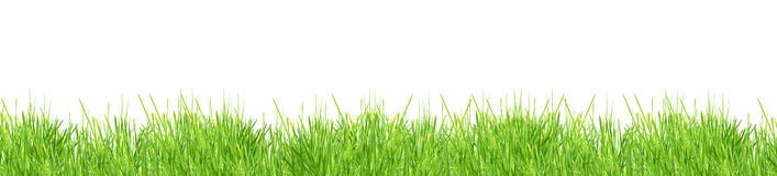 Grass. Isolated green grass on a white background Stock Photography