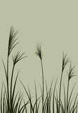 Grass. Floral  design. Meadow with grass Stock Photography