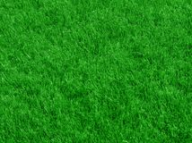 Grass. Close-up image of fresh spring green grass Stock Photography