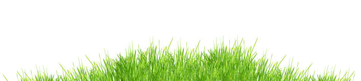 Grass. Isolated green grass on a white background Royalty Free Stock Photo