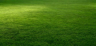 Grass. Scenic view of a fresh grass lawn royalty free stock photo