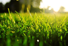 Free Grass Stock Photos - 13101393
