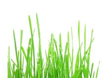Grass. Green greass with rain drops Royalty Free Stock Photo