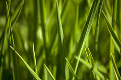 Grass. Background of freshly grown grass Stock Images