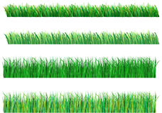 Grass. Green grass generated, different types of grass Stock Photography
