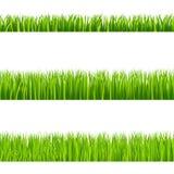 Grass. Illustration of isolated green grass vector illustration