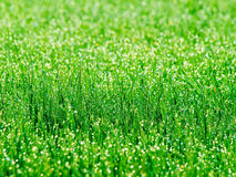 Grass. Royalty Free Stock Images