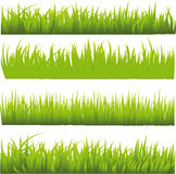 Grass. Isolated on white background Royalty Free Stock Photos
