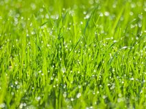 Grass. Royalty Free Stock Image