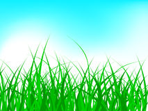 Grass. Green  grass pattern on bluish background Stock Photography
