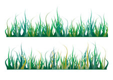 Grass. Colorful grass in various shades of green Stock Photos