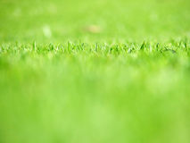 Grass. A small strip of grass in focus stock photography
