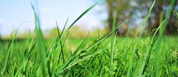 Grass. The natural landscape of a beautiful nature Royalty Free Stock Photo