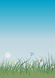 Grass. And flowers on blue sky background Royalty Free Stock Image