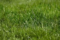 Grass. Green Grass stock photo