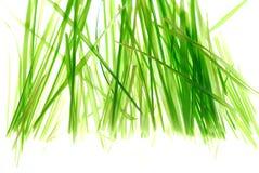 Grass. Green grass against light box Royalty Free Stock Photo