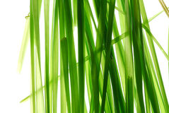 Grass. Green grass on light box Royalty Free Stock Images