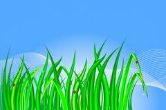 Grass. Stock Photos