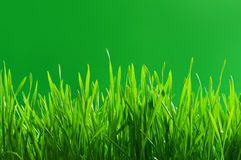 Grass. Green grass on green background Stock Photography
