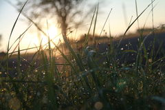 Grass. With droplets in the early summer morning Royalty Free Stock Photography