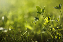 Free Grass Royalty Free Stock Images - 18880579